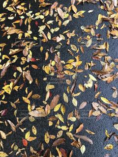 紅葉,雨上がり