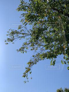 空,屋外,樹木,秋空