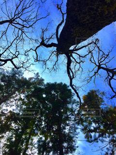 自然,空,青