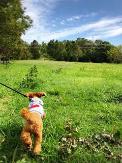 犬,屋外,景色,秋空