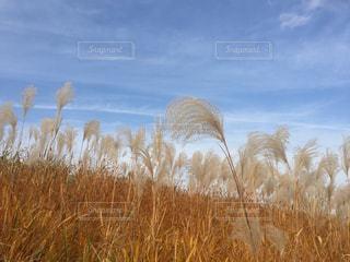 自然,風景,空,屋外,雲,景色,草,日中,レジャー・趣味
