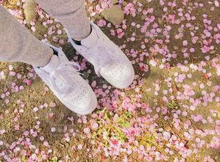 桜の花びらとスニーカー🌸の写真・画像素材[1827580]