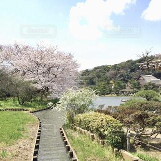 自然,空,花,桜,木,緑,雲,水,花びら,小川,お花見,屋根,pink,横浜市,三渓園