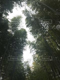 森林,木,屋外,森,樹木,竹,竹林,草木,日中,レジャー・趣味
