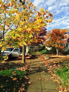自然,空,秋,紅葉,海外,綺麗,落ち葉