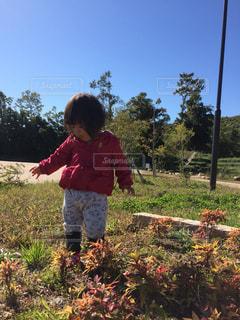 空,公園,秋,屋外,散歩,子供,女の子,草,樹木,人物,秋空