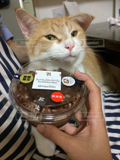 猫,期間限定,コンビニスイーツ,食欲の秋