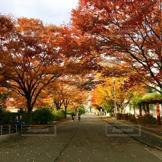 風景,空,秋,紅葉,屋外,東京,道路,季節,樹木,道,イチョウ,通り,秋空,キャンパス,フォトジェニック,移ろい,移り変わり