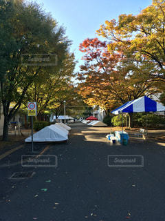 風景,空,秋,紅葉,東京,早朝,秋空,キャンパス,学園祭