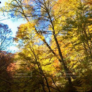 自然,風景,空,秋,紅葉,屋外,雲,幻想的,もみじ,山,オレンジ,旅行,秋空,レジャー・趣味