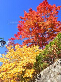 自然,風景,空,秋,紅葉,屋外,雲,水,幻想的,もみじ,山,オレンジ,岩,旅行,秋空,レジャー・趣味