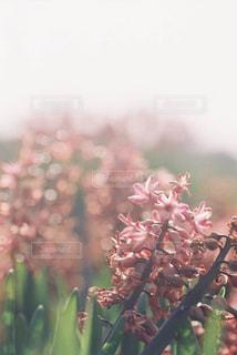 花のアップの写真・画像素材[1822161]