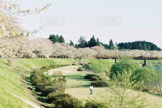 桜を眺める人の写真・画像素材[1832284]