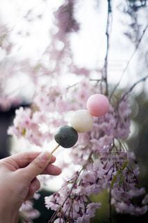 花よりだんごの写真・画像素材[1854721]