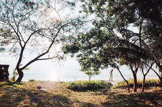 海水浴を楽しむ人の写真・画像素材[2096110]