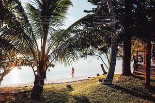海水浴を楽しむ人の写真・画像素材[2096112]