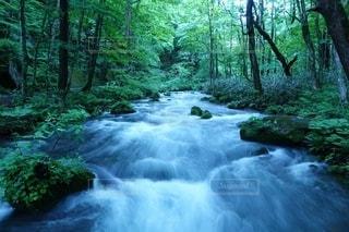 森の中の滝の写真・画像素材[3147857]