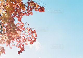 木の上に飛んでいる飛行機の写真・画像素材[1877613]