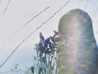 女性の写真・画像素材[2007551]