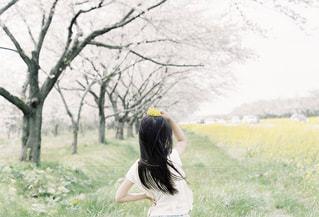 風景,桜,ロングヘア,後ろ姿,道路,菜の花,女子,子供,女の子,樹木,小さい,道端,ボケ,女の人,きらきら,髪の長い