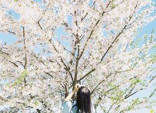 女性,風景,カメラ,桜,カメラ女子,晴れ,後ろ姿,撮影,子供,女の子,樹木,写真,女の人,桜の木,カメラガール