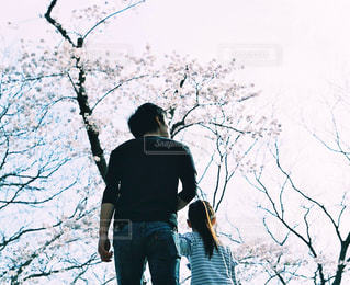 桜,親子,後ろ姿,女の子,背中,大きい,小さい,父親,桜の木