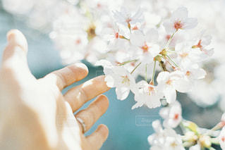 花を持つ手のクローズアップの写真・画像素材[2810293]