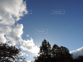 秋,太陽,木漏れ日,秋空,初秋