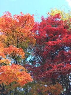 空,紅葉,京都,青空