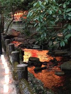 紅葉,川,ライトアップ