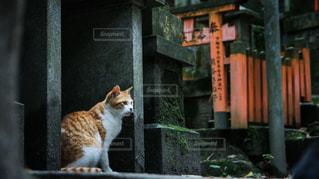 建物の上に座っている猫=狛猫の写真・画像素材[1687137]