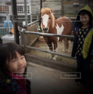 馬と一緒の写真・画像素材[2287295]