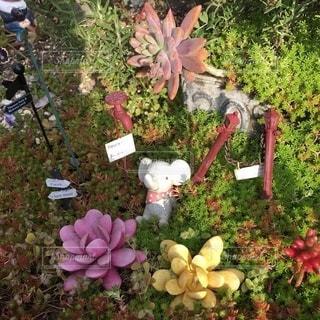 花畑のクローズアップの写真・画像素材[2768032]