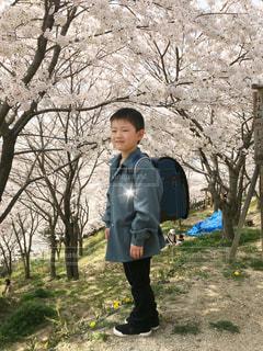 子ども,1人,風景,花,桜,屋外,満開,草,樹木,お花見,人,少年,若い,ジャケット,草木,ランドセル