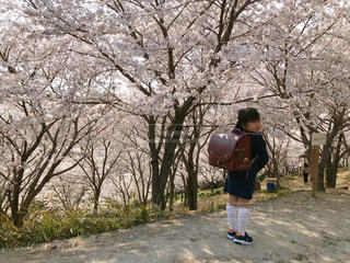 満開の桜の写真・画像素材[3088335]