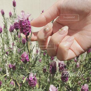 花を持っている手の写真・画像素材[1874280]