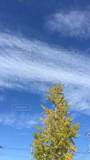 空,秋,屋外,植物,晴れ,青空,樹木,電線,銀杏,青い,秋空,草木,日中