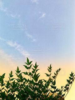空,秋,庭,屋外,植物,雲,夕焼け,夕暮れ,葉っぱ,夕方,南天,秋空,草木,インスタ映え