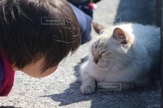 猫,沖縄,子供,ツーショット