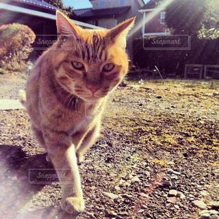 猫,動物,庭,太陽,ペット,人物,太陽光,トラ,ネコ