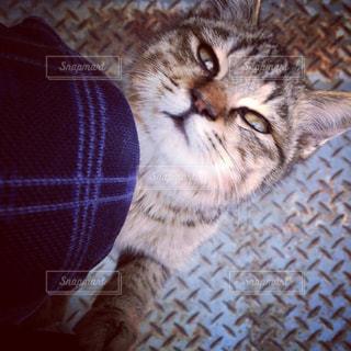 猫,動物,かわいい,ペット,人物,トラ,佐久島,ネコ,島の猫,ネコ科の動物