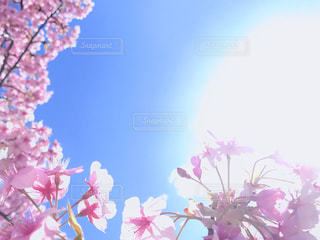 空と花の写真・画像素材[2997605]