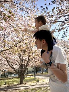 男性,子ども,家族,2人,風景,空,公園,花,春,桜,木,屋外,ピンク,青空,手,腕時計,花見,樹木,お花見,イベント,肩車,息子,お父さん,父と子,かたぐるま
