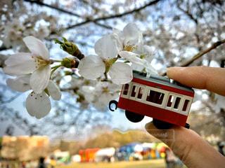 花,春,桜,木,屋外,白,電車,屋台,花見,イベント,祭り