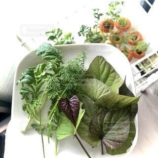 食べ物,緑,葉っぱ,室内,葉,野菜,ハート,食品,グリーン,新鮮,大根,さつまいも,にんじん,食材,草木,フレッシュ,ベジタブル,水耕栽培,新鮮野菜,採りたて,きみどり,健康的です,さつまいもの葉,リボベジ