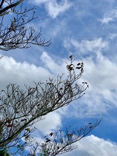 空,秋空,落葉,落葉樹,秋の雲