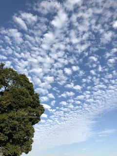 自然,風景,空,屋外,雲,秋空