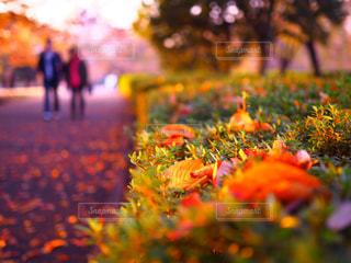落ち葉と紅葉の写真・画像素材[1643117]