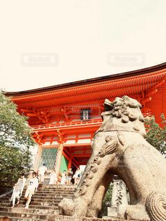 京都の狛犬の写真・画像素材[1668469]