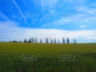 フィールドに空を飛んでいる人の写真・画像素材[1691180]